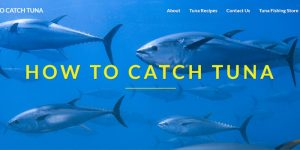 how to catch tuna